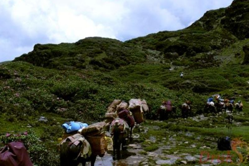 Drukpath Trekking