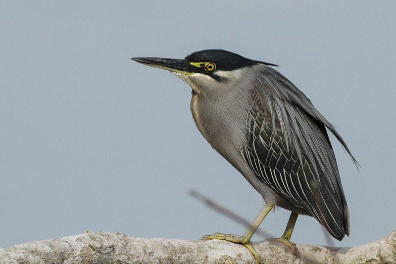 Kosi Tappu Wildlife Reserve